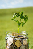 Plant growing in Coins glass jar for money on green grass Royalty Free Stock Photo