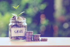 Plant growing  in Coins glass jar for money saving and investmen Royalty Free Stock Photo