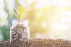 Plant growing from coins in the glass jar with raining effect stock photo
