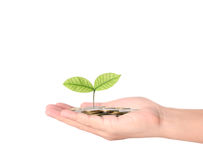 Plant growing from coins  in hand Stock Photos