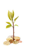 Plant growing from coins isolated on white Royalty Free Stock Photography