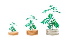 Plant growing on coins stack isolated background. royalty free stock images