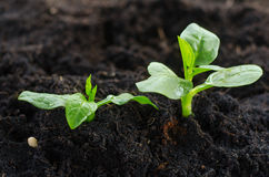 Plant Growing concept Stock Photography