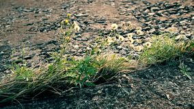Plant growing through concrete slabs stock video