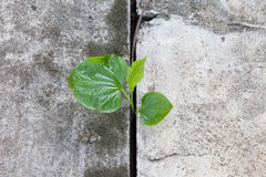 Plant growing from concrete Royalty Free Stock Images