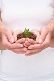 Plant growing in couple hands Stock Image