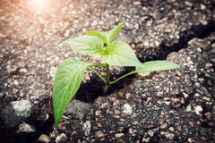 Plant growing from crack in asphalt. Green plant growing from crack in asphalt royalty free stock photos