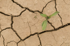Plant growing in a crack  ground. Plant growing in a crack on dry ground Stock Photography