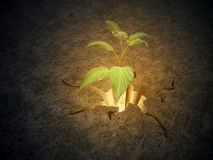 Plant growing from a crack in the ground Stock Photography