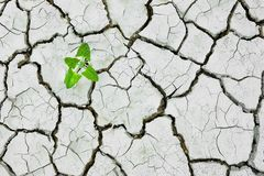 Plant growing Cracked dry soil, cracked earth, texture of grungy dry cracking parched earth. Global worming effect, drought, natural disasters stock photos