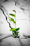 Plant growing from cracked earth Royalty Free Stock Photo
