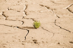 Plant growing in cracked earth Stock Image