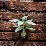 Plant growing from cracked wall bricks Stock Image