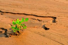Plant growing in a desert sand Stock Photos
