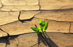 Plant growing through dry cracked soil Stock Photography