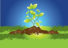 Plant growing from earth Stock Image