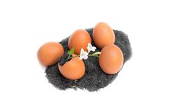Plant growing in egg shell Stock Image