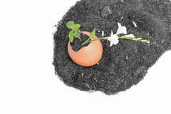 Plant growing in egg shell Royalty Free Stock Image