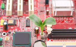 Plant growing through electronic circuit board Royalty Free Stock Photography