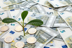 Plant growing from euro currency Royalty Free Stock Photos