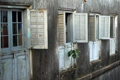 Plant growing from a Facade, Stone Town, Zanzibar royalty free stock image