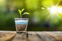Plant growing on glass of nitrogen potassium phosphorus. Fertilizer with sunlight and nature green background royalty free stock images