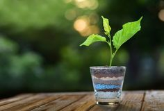 Plant growing on glass of soil and fertilizer layers on green b royalty free stock image