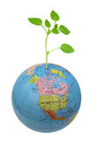 Plant growing from globe Stock Photos
