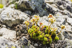 Plant growing on the ground granite. Royalty Free Stock Photo