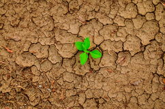 Plant growing through the ground, hope concept Royalty Free Stock Photo