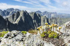 Plant growing on the ground in the mountains of granite. Royalty Free Stock Photography