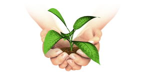 Plant Growing in hands. royalty free illustration