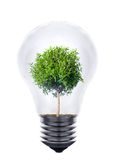 Plant growing inside the light bulb Stock Images