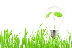 Plant growing inside the light bulb. Green eco energy concept, plant growing inside the light bulb Stock Images