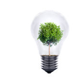Plant growing inside the light bulb Stock Image