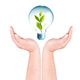 Plant growing inside the light bulb on hands Royalty Free Stock Photography