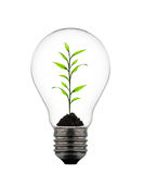 Plant growing inside the light bulb Stock Photo