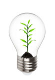 Plant growing inside the light bulb. Isolated on white background Royalty Free Stock Photos