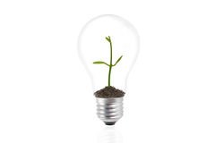 Plant growing inside the light bulb Royalty Free Stock Photos