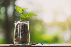 Plant growing from jar full of coins royalty free stock photos