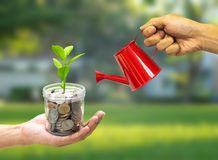 Plant Growing in jar with hand holding watering can - Investment And Interest Concept stock photo