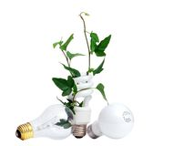 Plant Growing from Light Bulb Royalty Free Stock Image