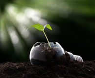 Plant growing in light bulb. Ecology ,business concept royalty free stock image