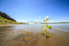 Plant growing in Missouri river Royalty Free Stock Photos
