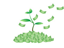 Plant growing from the money Stock Photos