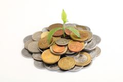Plant growing on money coins Royalty Free Stock Photos