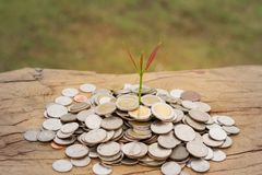 Plant growing from money coins held by a man`s hands - busine stock photo