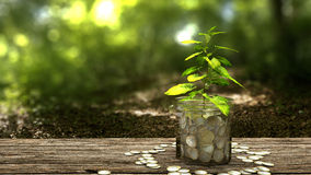 Plant growing from money jar. Royalty Free Stock Photos