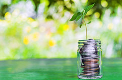 Plant growing from money jar. Concept of financial investment Stock Photo