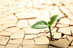 Plant growing in mud Stock Photo